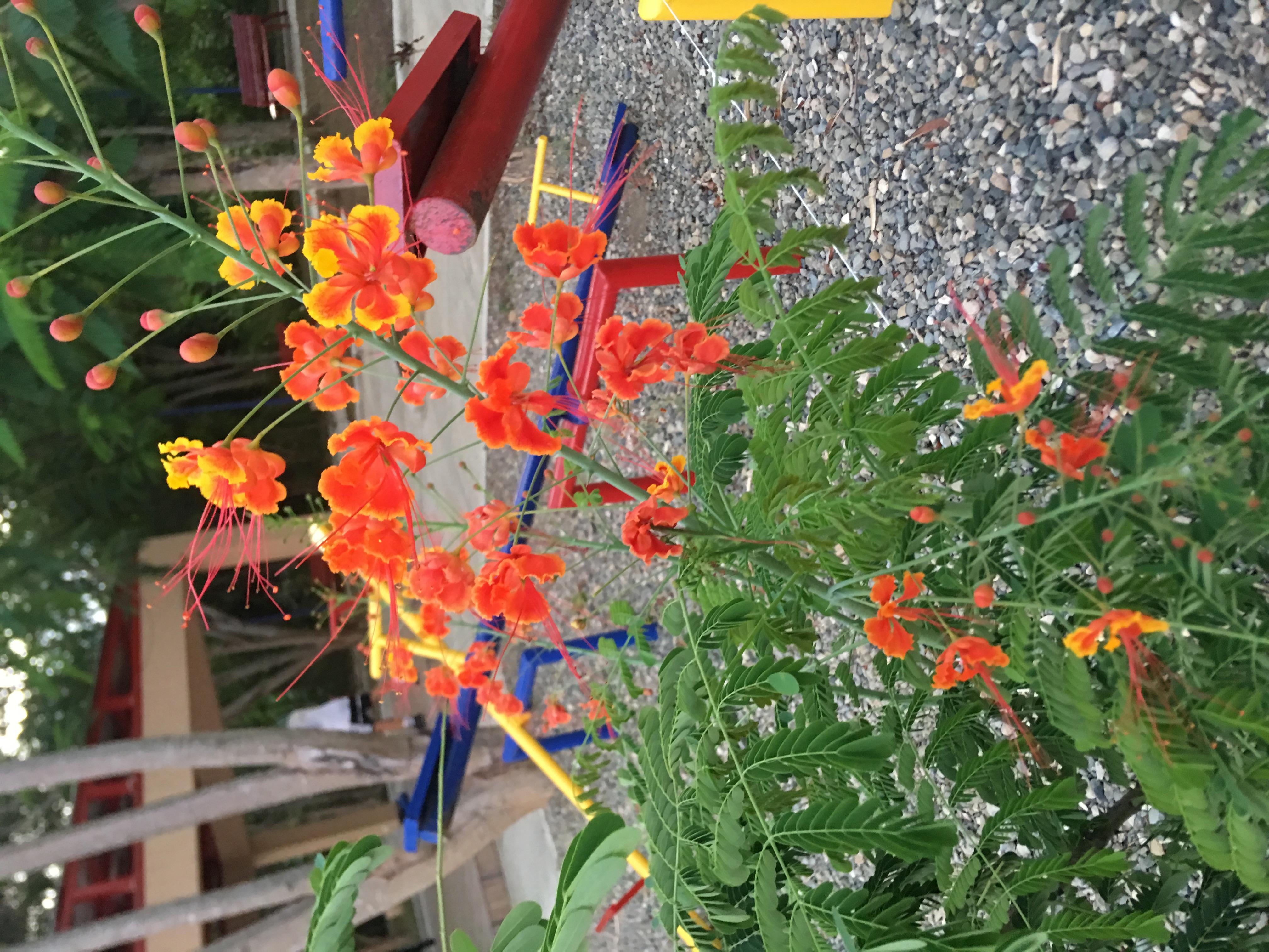 Flores llenas de Vida