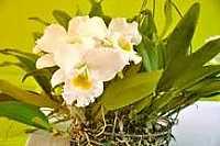 ecoenergia: Orquideas, despilfarro y hacerse el gracioso
